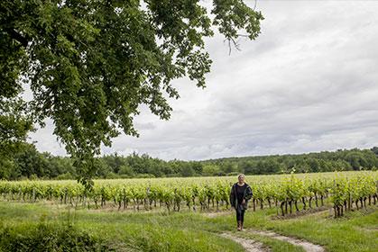Découvrez l'ensable des vins du Château Binest