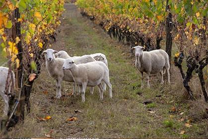 Découvrez l'ensable des vins du Château Flotis