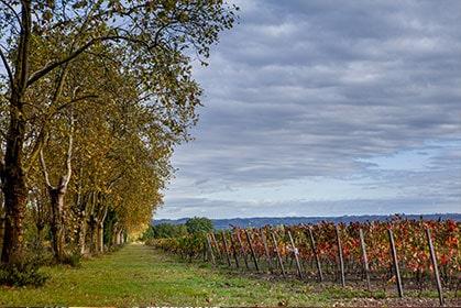 Découvrez l'ensable des vins du Château Montauriol