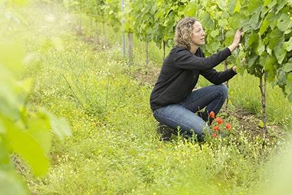 Découvrez l'ensable des vins du Domaine des Pradelles